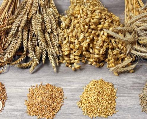 Našimi plodinami jsou pšenice, ozimý ječmen, žito, oves, kukuřice, hrách, vojtěška a řepka